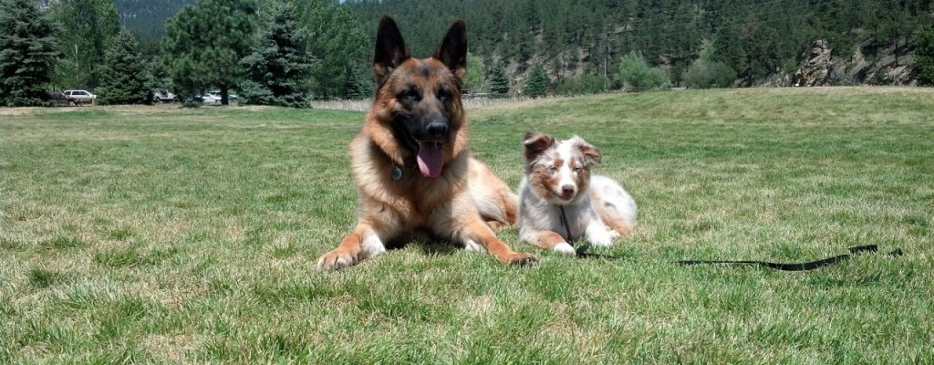 Denver Dog Training Questions and Answers