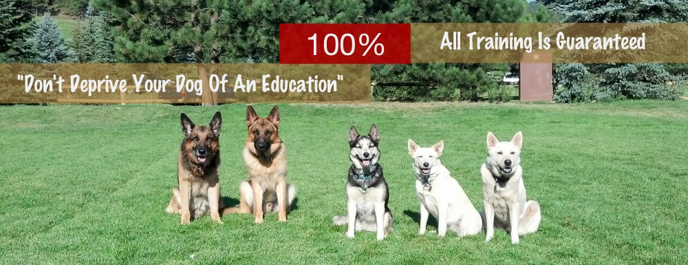 Obedience Training Denver