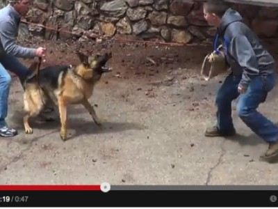 Protection dog Training Videos