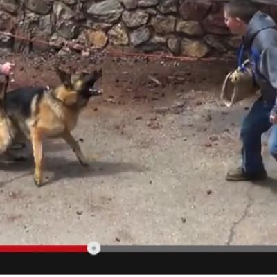 Protection dog Training Videos