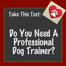 dog training in evergreen