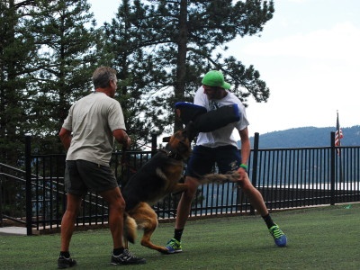 Why Do Personal Protection Dog Training